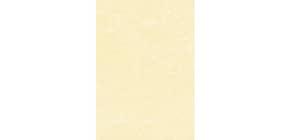Carta pergamenata Decadry Linea Corporate A4 165 g/m² champagne Conf. 50 fogli - T105077 Immagine del prodotto